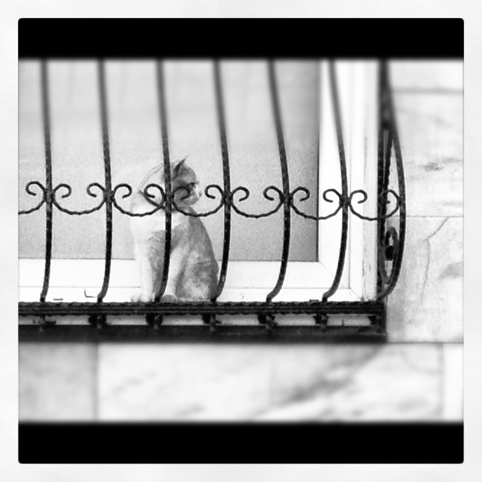 Istanbul Stray Cat in Window